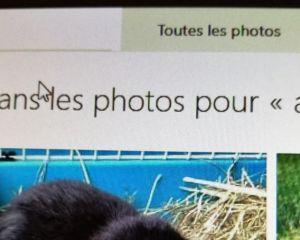Vous pourrez bientôt rechercher des mots contenus dans vos images sur OneDrive