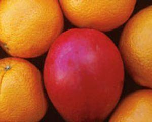 La mise à jour Mango dans une ou deux semaines chez Orange