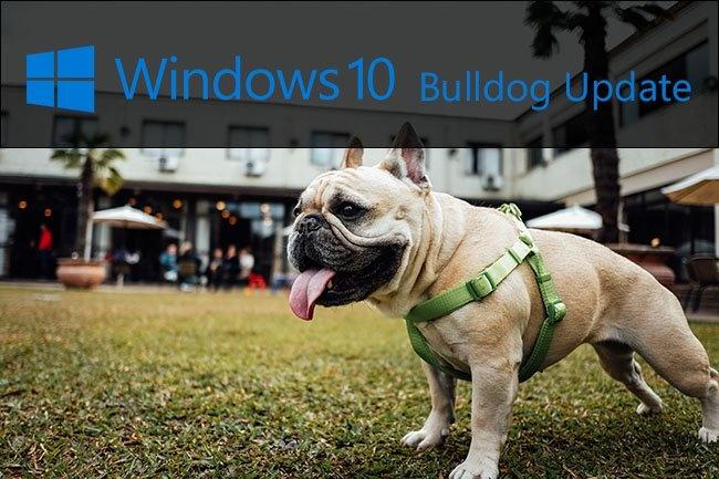 xbulldog-edition.jpg.pagespeed.gp-jp-jw-pj-ws-js-rj-rp-rw-ri-cp-md.ic.jb1VdIlr-c